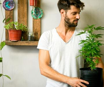 5 Razones por las que deberías considerar cultivar tu propio cannabis