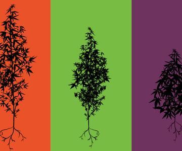Indica vs. Sativa: ¿Cuál es la diferencia entre los tipos de cannabis?