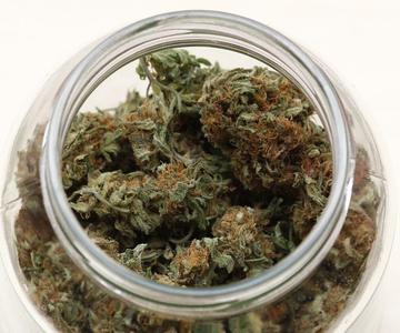 ¿Qué influye en la degradación del THC y otros cannabinoides?