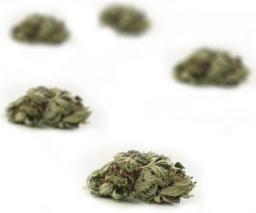 ¿Qué son las yemas de cannabis de palomitas de maíz?