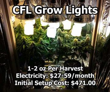 Ejemplos de los sistemas de cultivo de cannabis más comunes