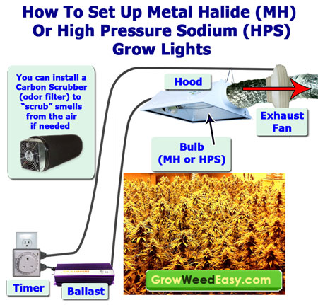 How to set up MH or HPS Grow Lights