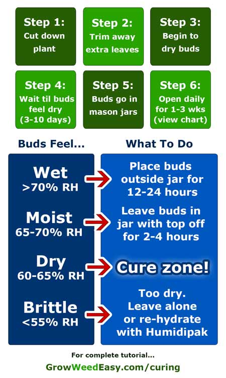 Step-by-step curing diagram & guide for harvesting cannabis