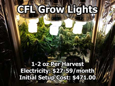 CFL lights over flowering cannabis