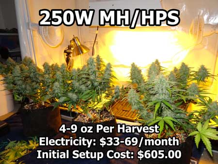 A 250 watt HPS growing light behind some fattening cannabis plants